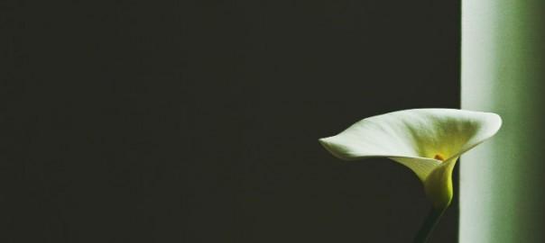 hvid-blomst