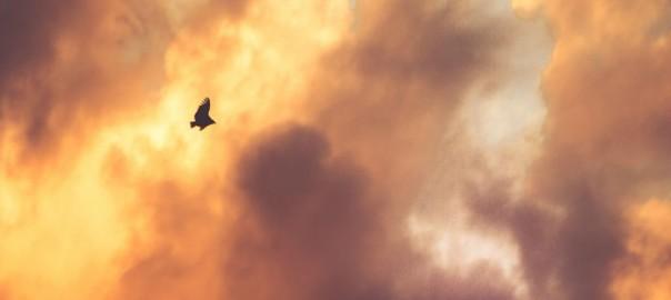 flyv-fugl