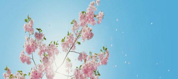 pseudo-blomst